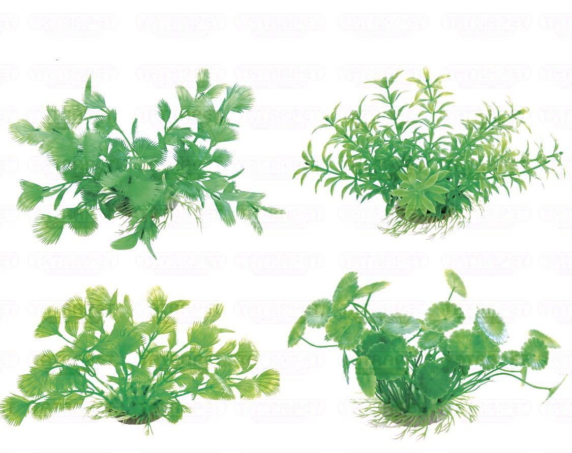 Rostlina 10-12cm mix na kartě