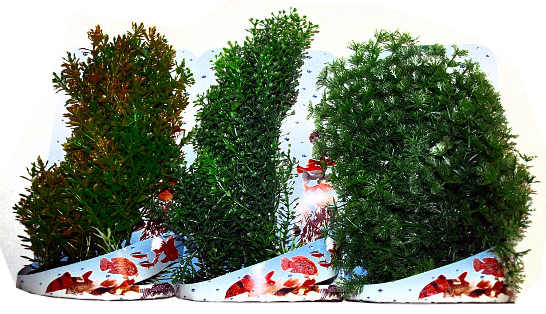 Rostlina 15-20 cm mix na kartě