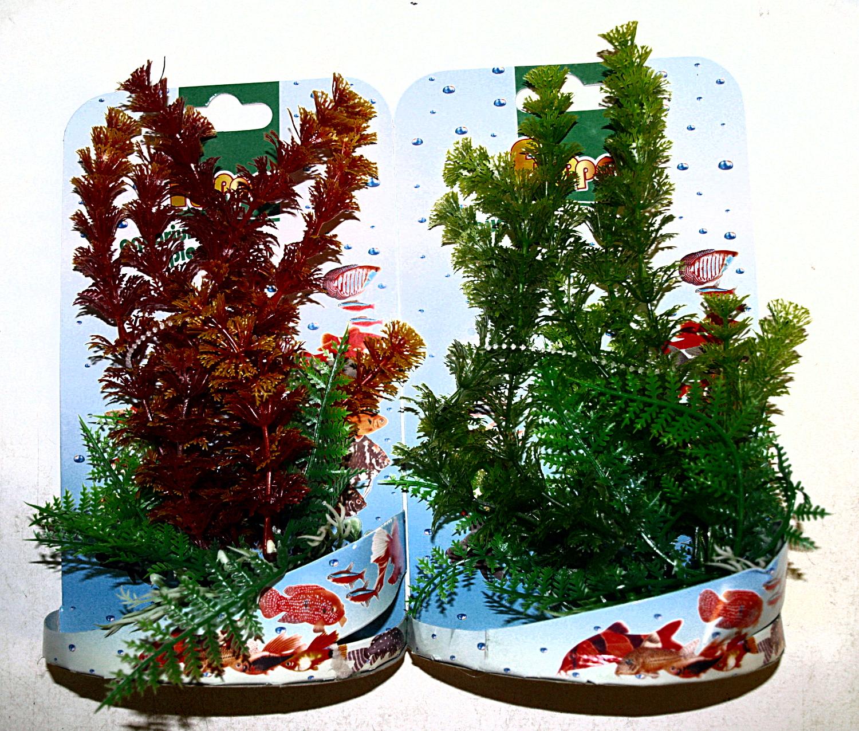 Rostlina 18-20 cm mix
